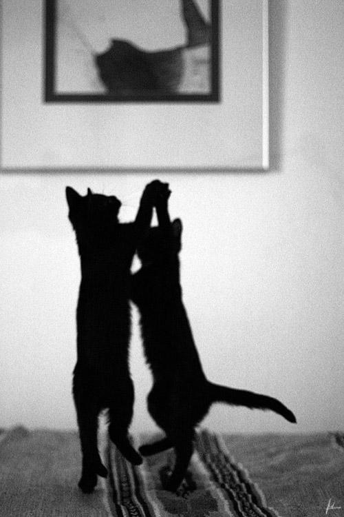 Tanz der Katzen