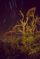 Tanz der Sterne