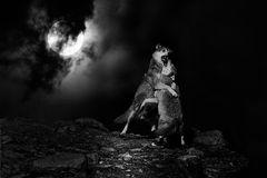 Tanz der Wölfe
