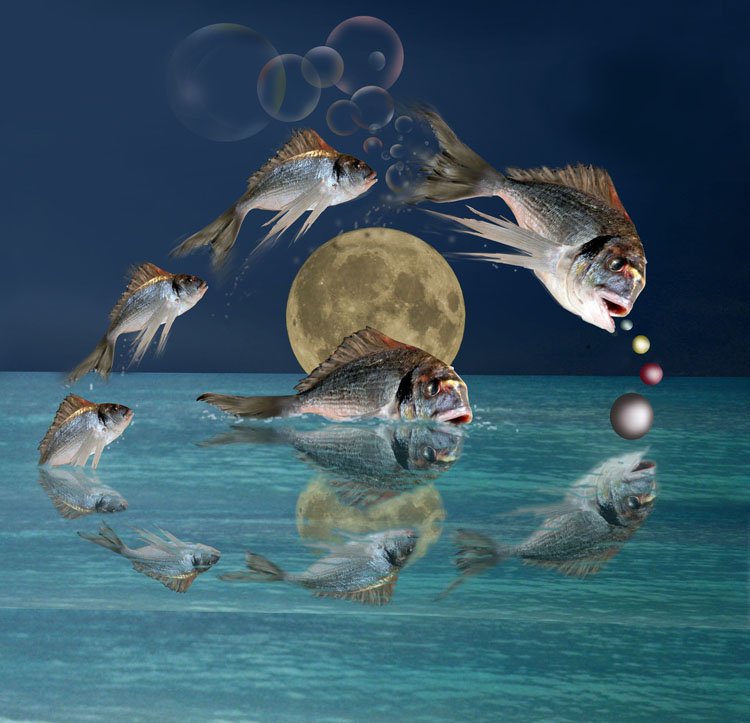 Tanz im Mondschein