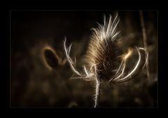 Tanz im Wind...