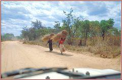 Tanzania 2001 - Tunduru, Ruvuma Region - Frauen mit Buschgras