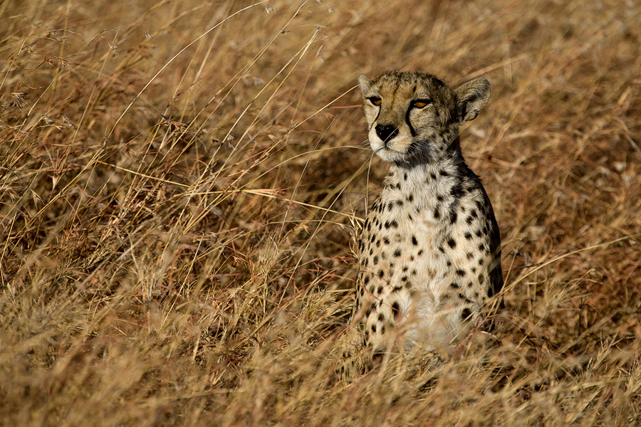 Tanzania 2010