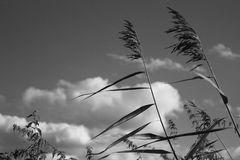 Tanzen mit dem Wind
