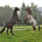 tanzende Pferde 02