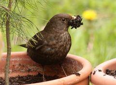 Tapete für das Nest