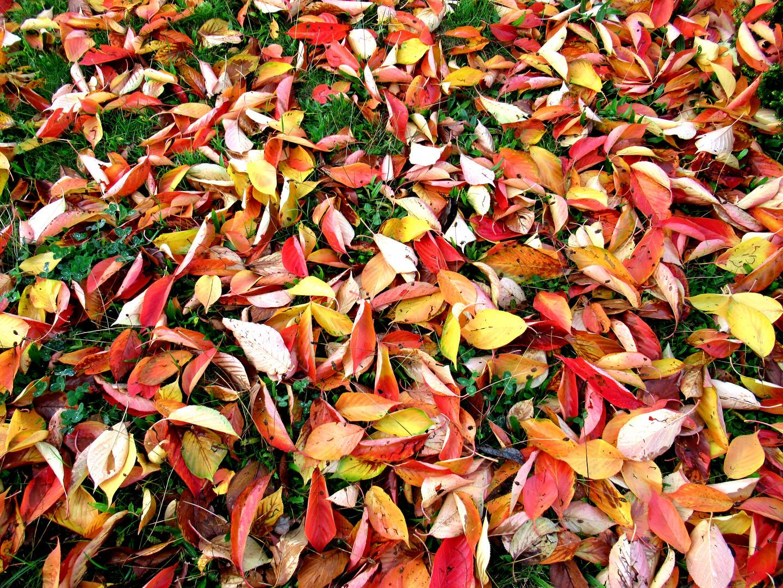Tapis d'automne.