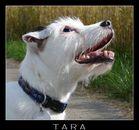 Tara, du fehlst uns...