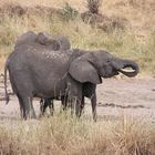 Tarangire Nationalpark - Tansania - 3