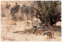Tarangire NP - Tanzania