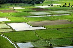 Taro Felder im Hanalei Valley auf Kauai
