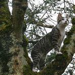 T'as vu où je suis grimpé ?