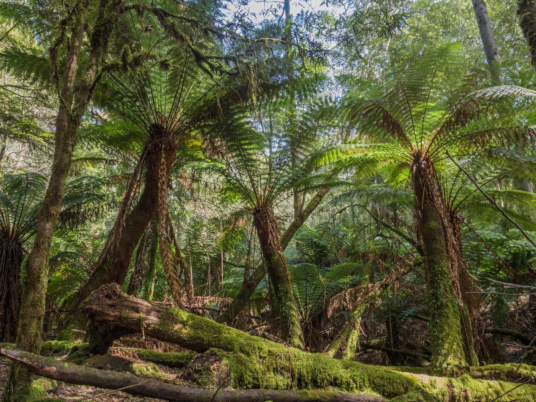 Tasmanien IV
