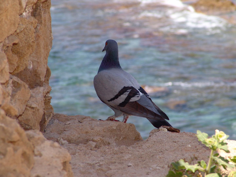 Taube hält Ausguck