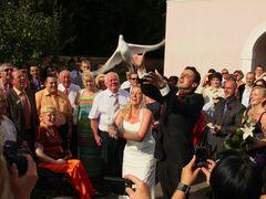 Taube Hochzeit