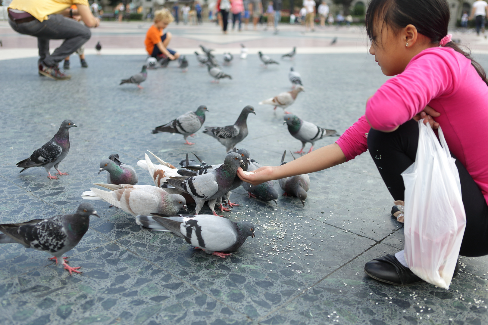 Tauben in Barselona
