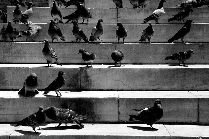 Tauben in Istanbul