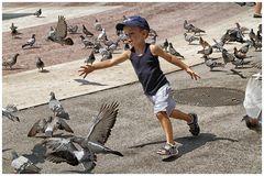 Tauben jagen