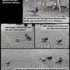 Tauben sind wie Menschen