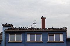 Taubendach in Haguenau