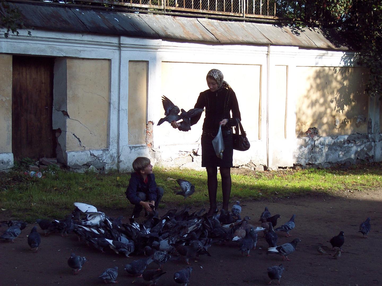 Taubenfüttern in St. Petersburg