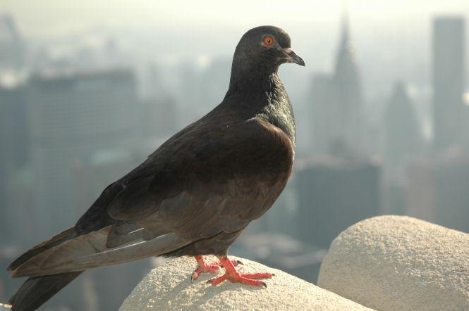 """""""Taubenperspektive"""" von Empire State Building"""