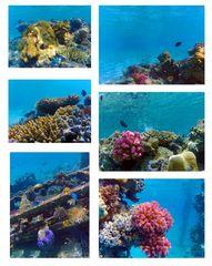 Tauchen in Sahl Hasheesh und Hurghada