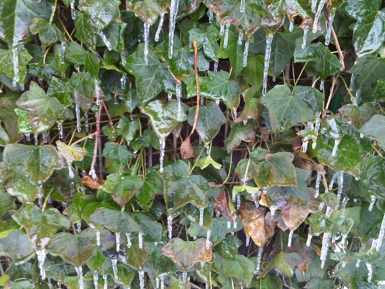 Tauen+Frost