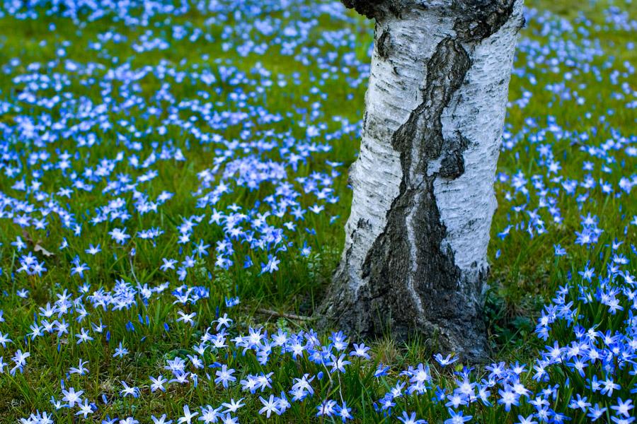 Tausend Blaue Sterne