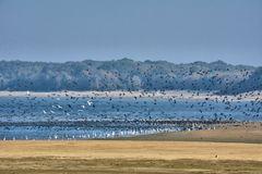 TAUSENDE von Wasservögel