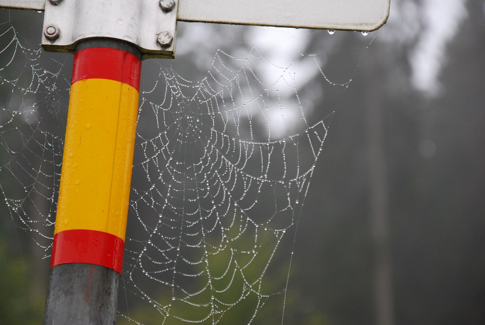 Tautropfen auf Spinnennetz / Dewdrops on Spiderweb