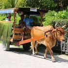 Taxi auf Ladigue (Seychellen)