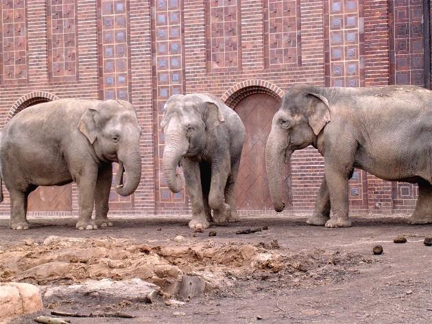 Teambesprechung Foto Bild Tiere Zoo Wildpark Falknerei