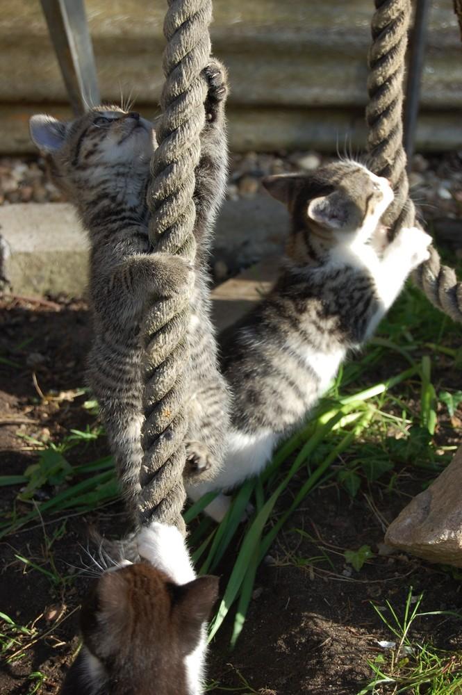 Teamwork Cliffhanger