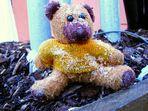 Teddy! - Come Home!