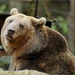 Teddy, der Bär