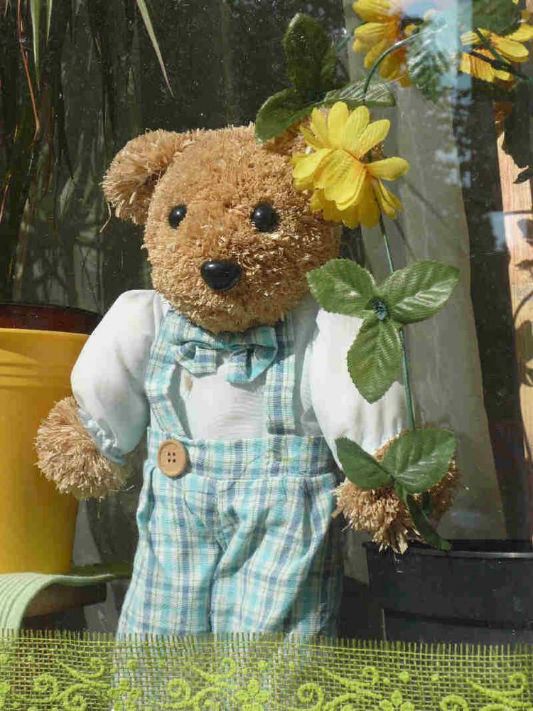 """Teddy hinter """"Fenster"""" gesichtet :)))"""