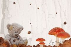 Teddy im Herbst