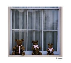 Teddy lives here
