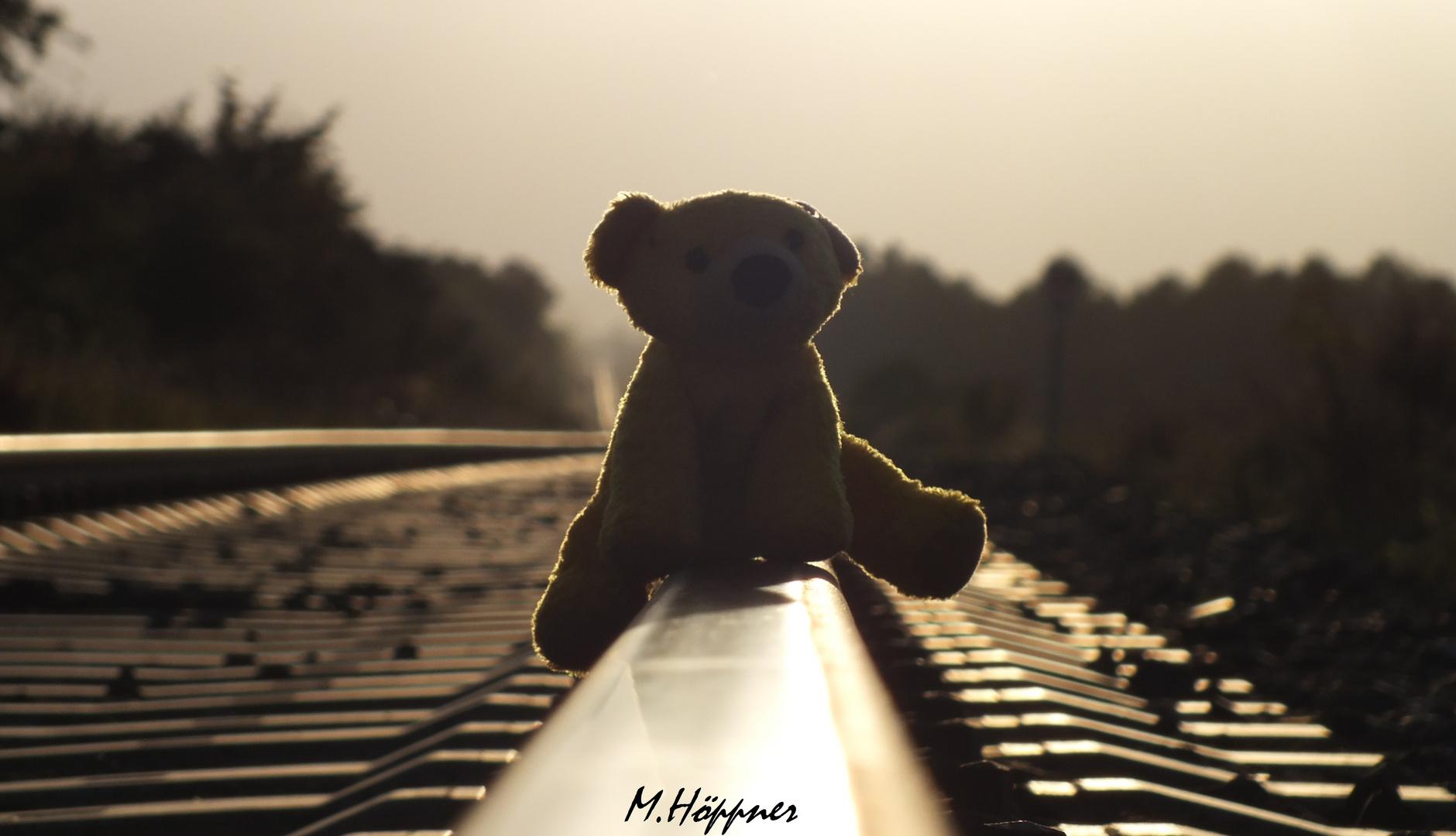 Teddy unterwegs in der Abendsonne
