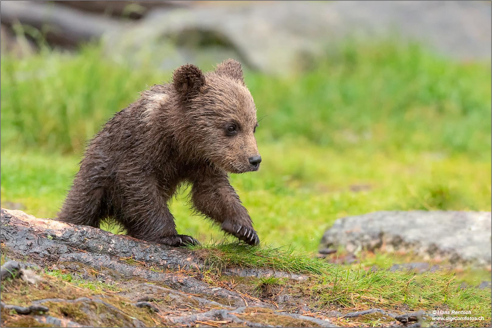 Teddybär :-)