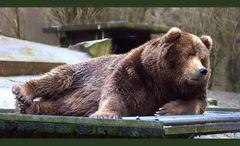 Teddybär shooting.....