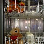 teddys in the wash