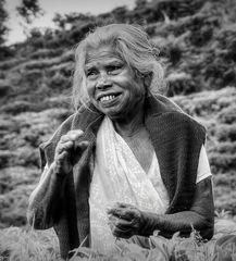 Tee-Pflückerin Sri Lanka