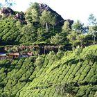 TEE Stube und TEE Plantagen Kerala Indien +StoryzumFoto