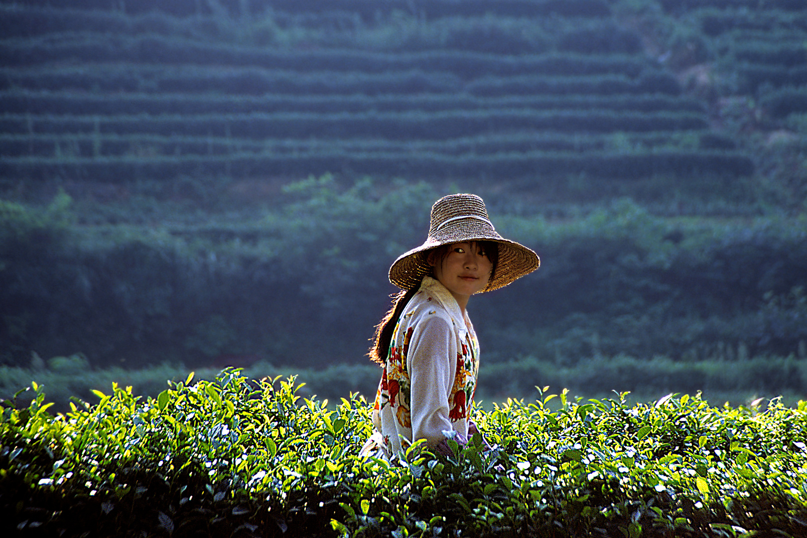 Teepflückerin in China