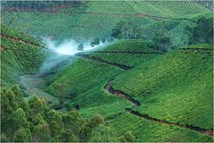Teeplantage bei Munar