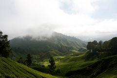 Teeplantage in Cameron Highlands