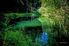 Teich am Kaltenbachsee