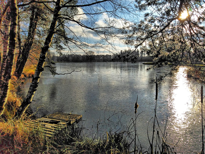 Teich bei Muckental